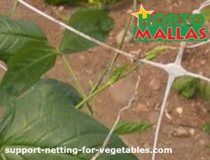 support system with trellis net